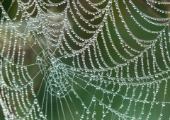 A cobweb covered in dew