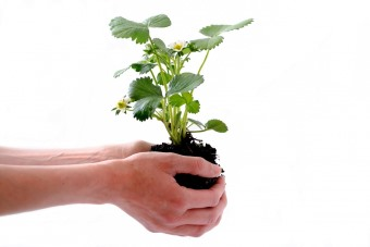 Person holding a plant in its soil